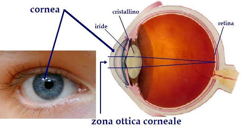 immagine che descrive la posizione della cornea, iride, cristallino e retina